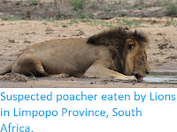 https://sciencythoughts.blogspot.com/2018/02/suspected-poacher-eaten-by-lions-in.html