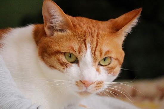 二匹の猫と徒然なるままに ゆずとカイ