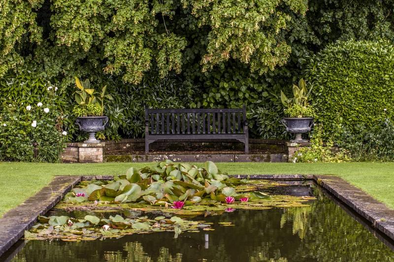 estanque con nenufares en el jardin