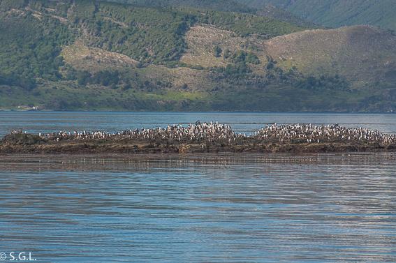 Isla de los pajaros en el canal Beagle. Argentina