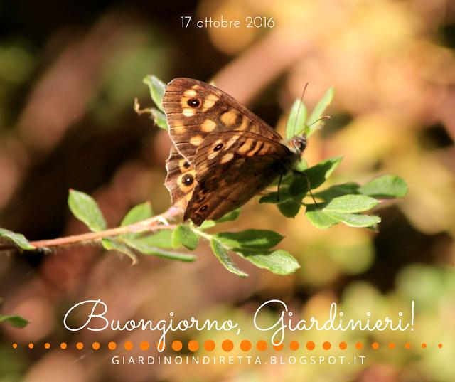 farfalle - l'agenda del giardino e del giardiniere - un giardino in diretta