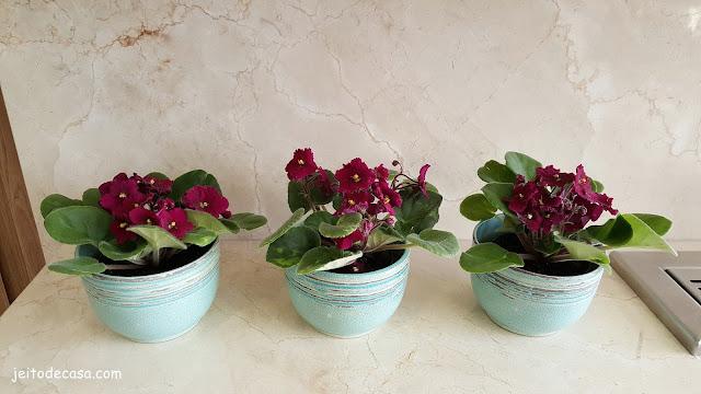 violetas-na-decoração