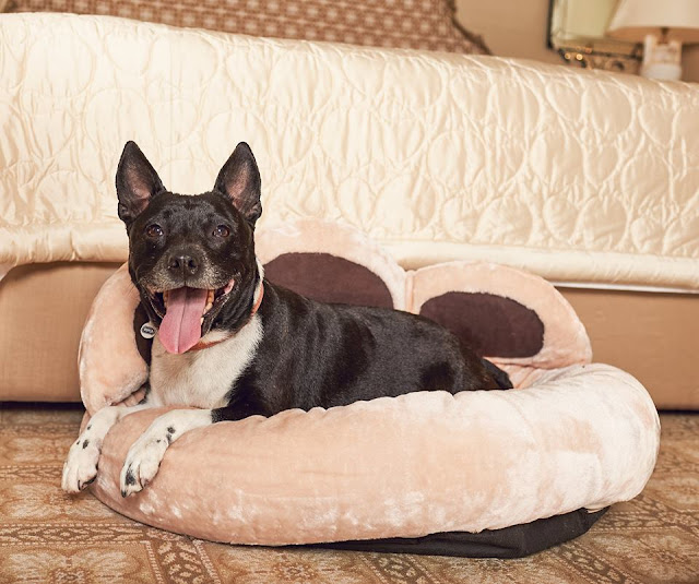 VIP DOG - entertainment news, lawson james blog