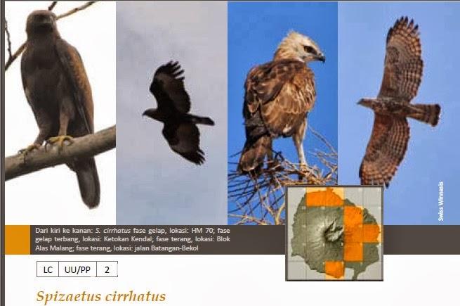 8100 Koleksi Gambar Burung Elang Mp3 Gratis
