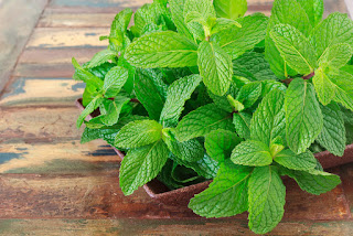 7 health benefits to be gained from the leaf of Mint