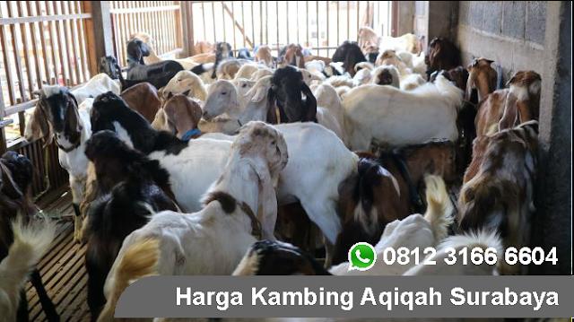 Jual Kambing 2019 Surabaya, Sidoarjo, Gresik