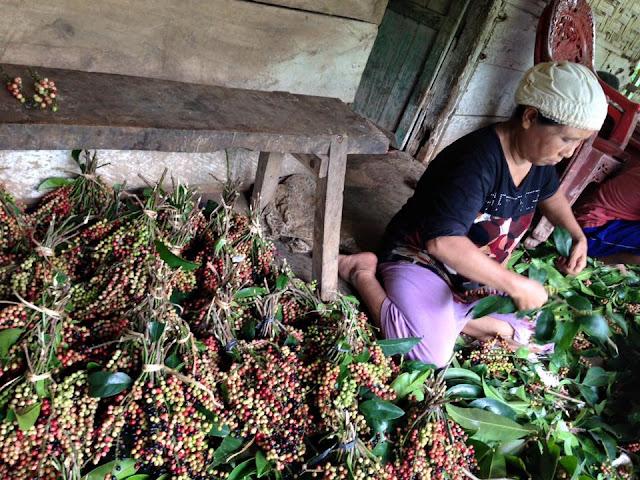petani buah buni yang mengandung khasiat ampuh