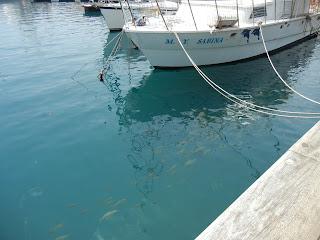 Peces en el puerto de San Sebastián de la Gomera