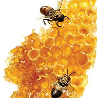 Honey Bees with honey