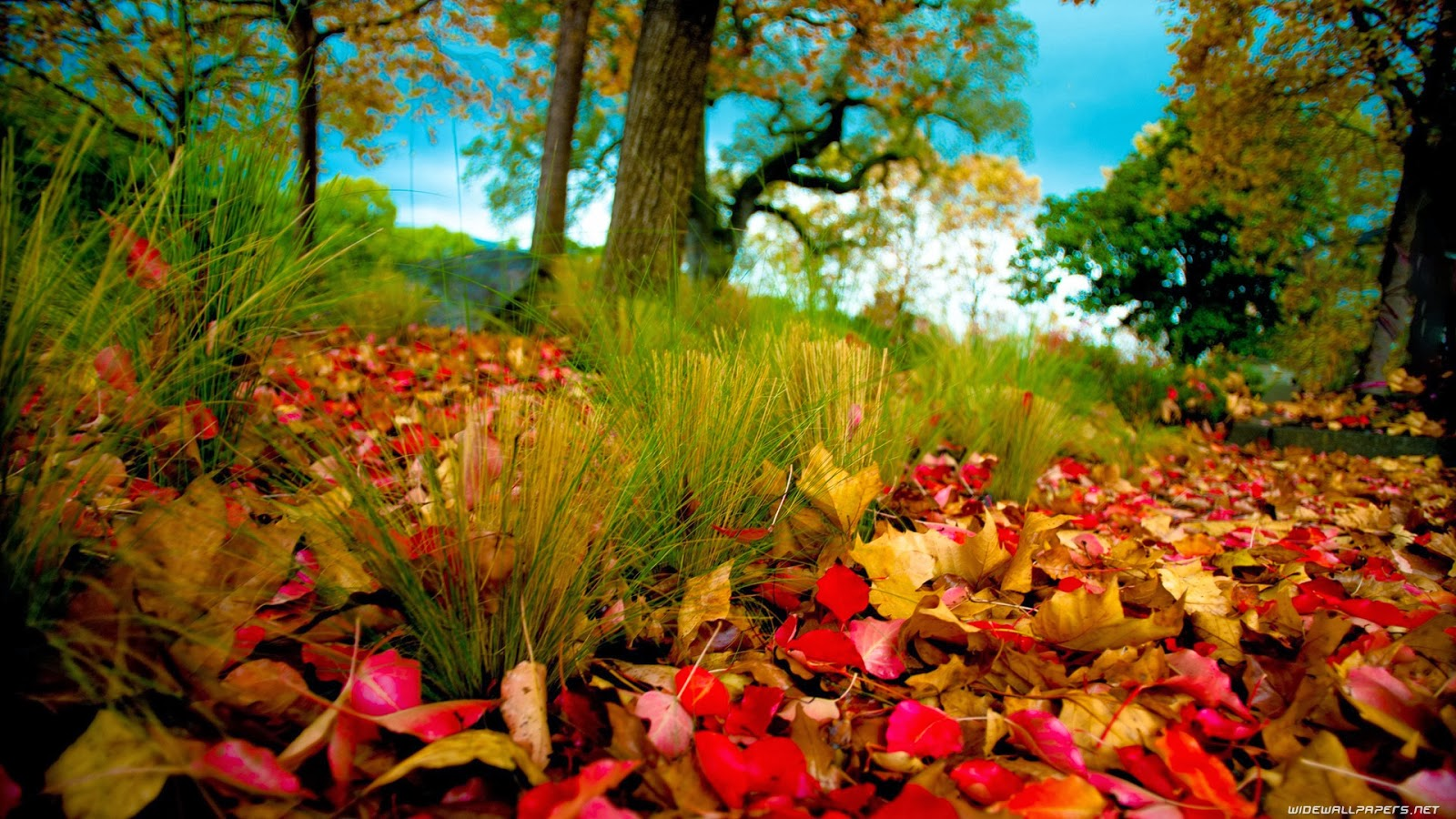 HD Wallpapers 1080p Nature autumn   Nice Pics Gallery
