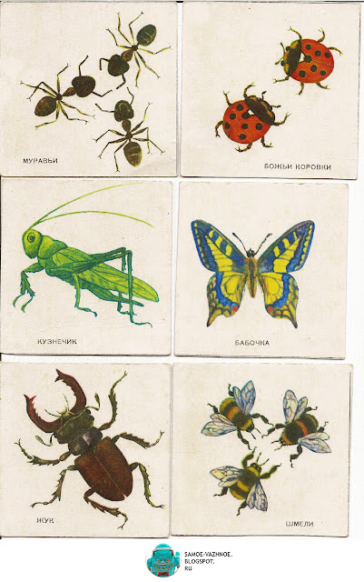 Игры с карточками для детей СССР. В лесу игра СССР 1986 год. Игра насекомые СССР В лесу. Карточки насекомые.