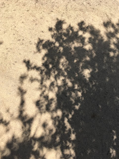 Start of eclipse image showcasing shadow details, before crescent shapes arrived.