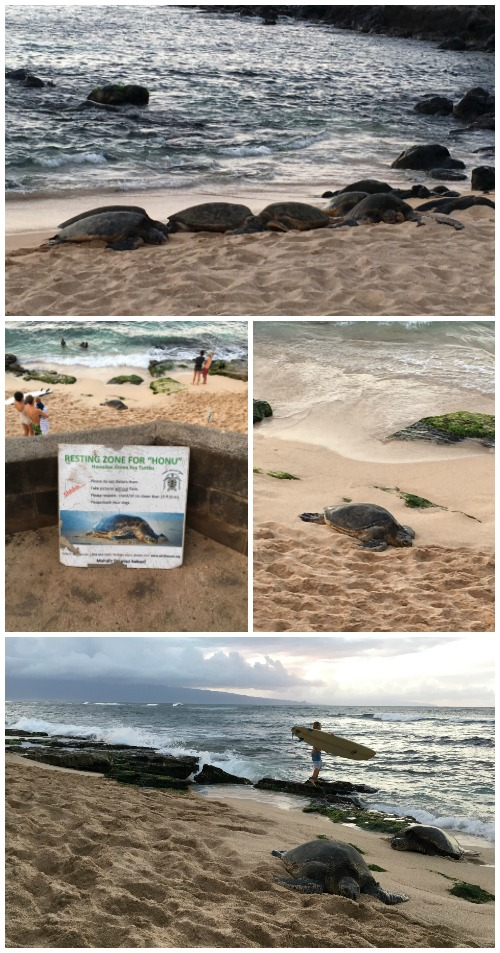 Ho'okipa Beach Park Maui turtles