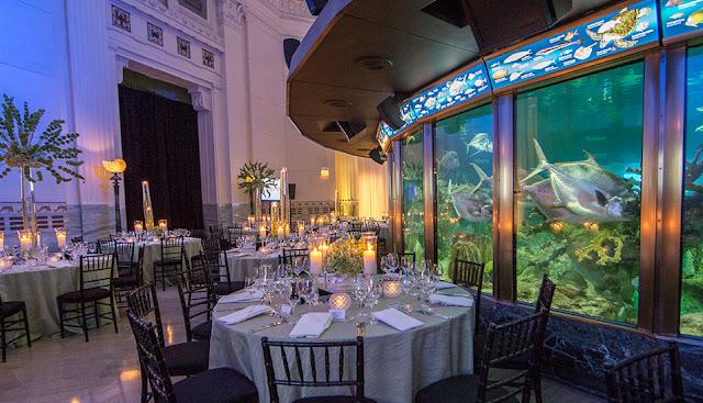 Aquarium Wedding Venues Shedd Aquarium