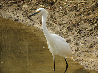 Sacramento National Wildlife Refuge California birding hotspot auto tour