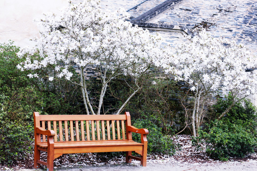 Bench in Angers, Loire Valley