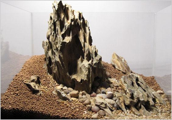 đá tiger trong một bố cục hồ thủy sinh