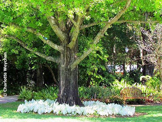 Heathcote Botanical Gardens: Small Is Beautiful! Two Petite Botanical Gardens On