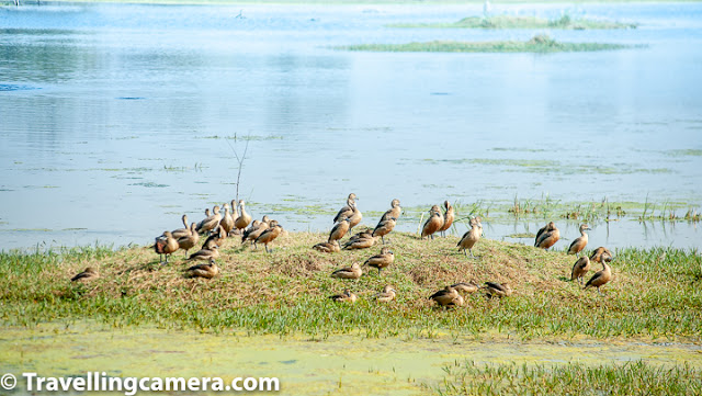 In my previous post of this series, started talking about some of the good birding spots in and around Delhi. We have already spoken about Okhla Bird Sanctuary, Surajpur Bird Sanctuary, and Sultanpur Bird Sanctuary. This time we will head inside the city as well as explore some spots that are a few hours removed from Delhi, but still can be covered in a day or over a weekend.       Keoladeo National Park (Bharatpur Bird Sanctuary) Bharatpur bird Sanctuary definitely is one of the best places to go birding near Delhi. To make your trip most effectice, plan for at least two days, else it would get too tiring. You would also see birds in your hotel or resort so make sure you set time aside to just relax and soak it all in.       Let's first see some distance approximations from nearby cities:     Delhi and Bharatpur – 190 km (National Capital of India)  Agra and Bharatpur – 50+ km (the place where taj Mahal is)  Mathura and Bharatpur – 30+ km (An important place for Hindus. There are lot fo temples in this town)  Jaipur and Bharatpur – 170+ km (Jaipur is capital city of Rajasthan state of India)      Luxury trains like Palace of Wheels also cover Bharatpur National Park and if you opt for such option, there is no need to read this post any further because they take care of everything. Nearby airports around Bharatpur are Delhi and Jaipur and there is a railway station in Bharatpur.       Broadly we can divide whole year into 3 seasons of North India - Winters (Oct-Mar), Summers (April-June), Monsoons (July-Sept).       Monsoon is worst season to visit Bharatpur National Park because of high bushes all around and if it's raining, birds would be under their identified shelters. So bird sightings are far less in rainy season.      Summer is a good time but you only find resident birds around and walking in summers of Rajasthan is a pretty big challenge but that can be easily resolved by hiring a cycle or cycle-rickshaw.      Winter becomes the best because of various reasons - migratory birds visit the park so you see more than the resident birds of Bharatpur. Even though, resident birds in themselves are a treat to watch. Also walking around in winters is much better than any other season in Bharatpur. Apart from that winter light is just perfect for photography, especially Nov-feb months are pretty good.       Keoladeo National park has Indian Darter, Indian Sarus crane, heron, cormorants, storks, migrant ducks, common teal, gadwall, shoveler, knob-billed duck, Indian shag, white spoonbill, green sandpiper, common sandpiper, oriental ibis, babblers, bee-eaters, buntings, guails, warblers, osprey, short-toed eagle, greater spotted eagle, crested serpent eagle, sea eagle and lot more. On the whole there are 300+ which are hard to list. Also, Parrots of Bharatpur are very friendly and pose you very well. We attributed their friendliness to the fact that no one was really paying much attention to them.        Apart from birds one can also see Nilgai, chital deer, white sambar, Indian porcupine, small Indian mongoose, jungle cat, fishing ca etc. You certainly see cows inside the park. And we have also heard that Hyenas and Jackals can be seen inside the park, but we did not see these during our trip.       It is not rare to see snakes, turtles, lizards, frogs and other species near the water bodies of Bharatpur National Park, and especially in monsoons, which is probably worst season to visit Bharatpur. During summer, you will also see several species of butterflies.      Lodhi Gardens While the boards at Lodhi Garden list a handful of bird species, I am sure there are more than those around. For example, I find it hard to believe that the omnipresent Brown-headed Barbets and Coppersmith Barbets haven't discovered this green haven yet. And I am pretty sure there are more than two species of starlings here - the board only mentions Common Mynah and Brahminy Starling.    The best thing about Lodhi Gardens is that it is bang in the middle of the city and yet once you are inside, you feel as if you are removed from the myriad city noises - traffic, industry etc. This is where you can find people doing what they like to do - in the morning there are various exercise groups, photographers, people who are playing Frisbee with there families. It is an improbable place in many regards. And then you are surrounded by tall, domed, medieval monuments and several decades-old trees.     So it isn't surprising that you also hear several bird sounds and then you spot them too. Just writing about this makes me want to go back to Lodhi Gardens, which I can't because of the lockdown.     The tamed geese in Lodhi Gardens are friendly enough when they feel like it, however, if they take a disliking to you, you will find them pecking on your feet to drive you away. Ducks are a little anti-social and prefer to hang out away from the human population.    Cormorants, Egrets, Parakeets, and Bee-eaters are a common sight and Koels and Papeehas are a common sound. If you are lucky you will also spot the Indian Grey Hornbill and one of the two city barbets. Apart from that you will also find butterflies and squirrels and various types of fish too.     Lodhi Garden is a nice place to visit if you want to photograph city birds. The best time to visit is the evenings and early mornings in summer and pretty much the entire day in winter.     Other spots that we are yet to check out  There are several other spots in Delhi that we have been planning to visit but haven't been able to get there yet. These are Yamuna Biodiversity Park, Sundar Nursery, and Sanjay Van. Of these I am sure that Yamuna Biodiversity Park would host several migratory birds during winter, and Sundar Nursery and Sanjay Van would be good places to spot smaller songbirds.     Actually, we are desperate for this lockdown to get over so that we can head out with our camera. While we are hearing birdsongs near our home now, but its been a while since we really saw any new birds. Anyway, as soon as we are past the Covid-19 pandemic, we'll be back in action and visit these birding havens.