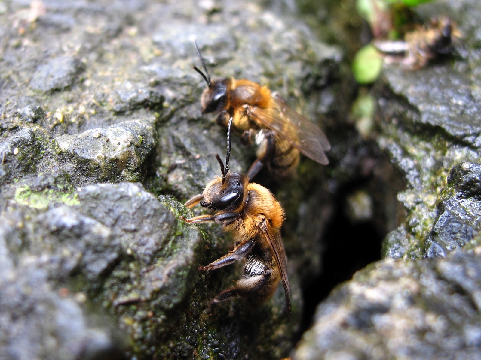 A Few Years Ago In The Concrete Path At Front Of Our House Became Busy With Bees Coming And Out We Umed They Were Honeybees That Had