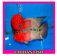 Laohan Fish Gallery APK