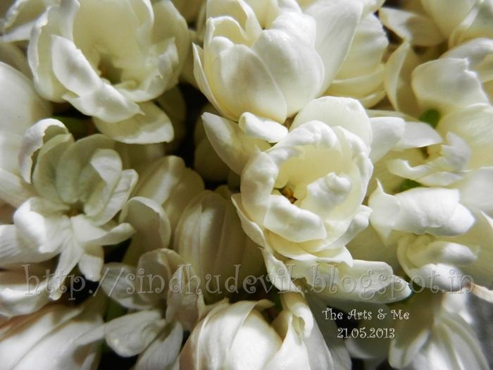 Jasminum sambac single layer petal jasmine flower