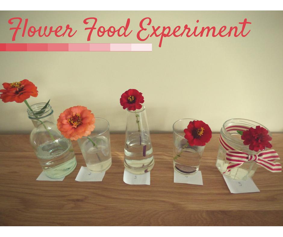 Homemade Flower Food Experiment
