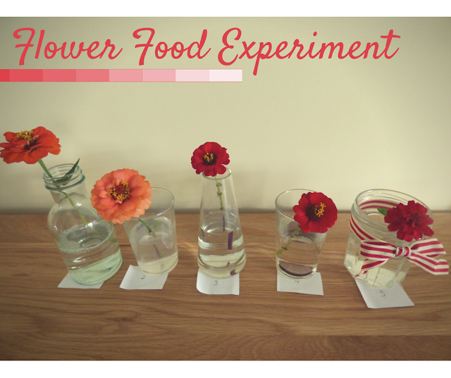 Homemade Flower Food Experiment