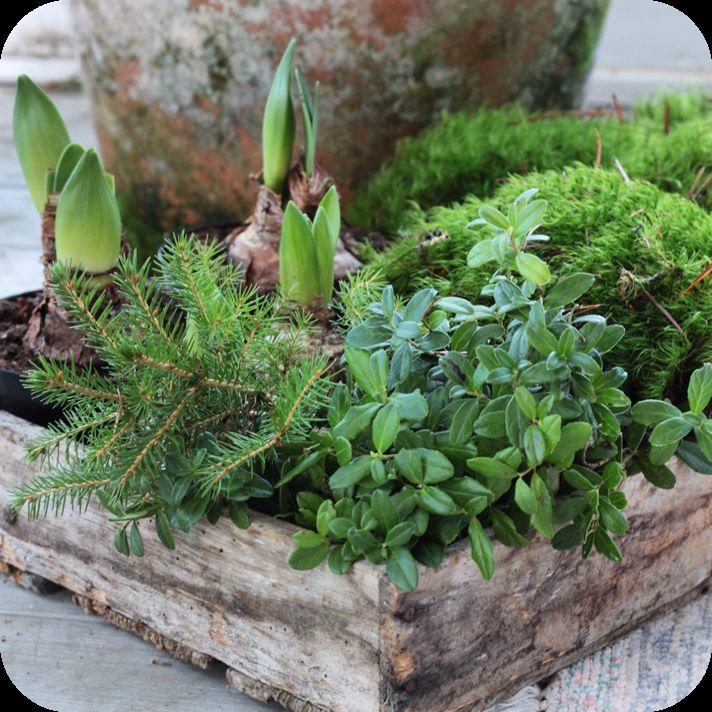 Semaine 50 sur les blogs d co for Composition florale exterieur hiver