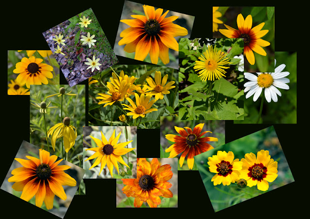 yellow daisy collage