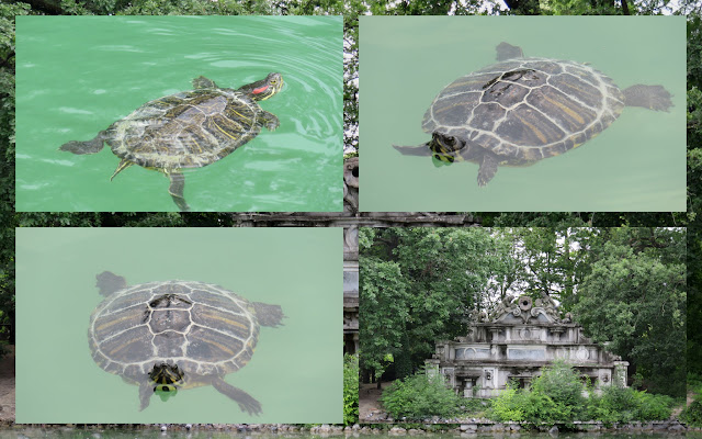 Day trip to Parma - Turtles in Parco Ducale