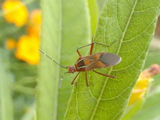 foto-insecto-antonio-marques-brasil