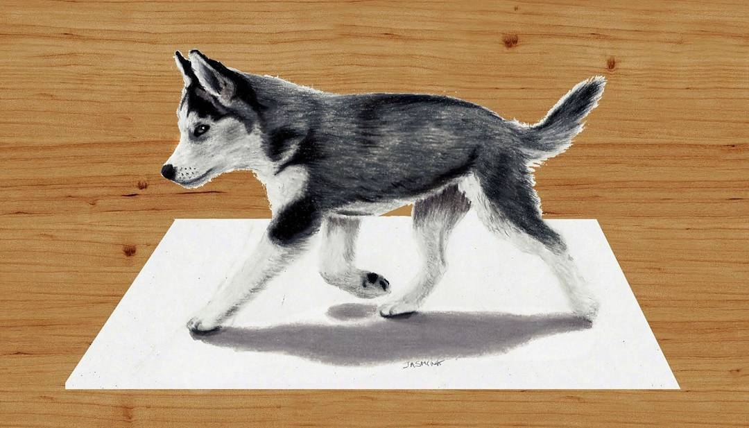 07-Siberian-Husky-Puppy-Jasmina-Susak-Realistic-Animal-Drawings-with-Colored-Pencils-www-designstack-co