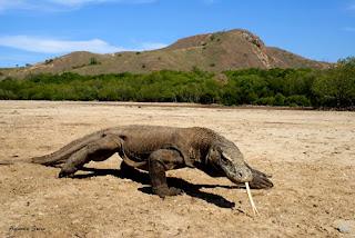 Hewan Paling Berbahaya Di Dunia