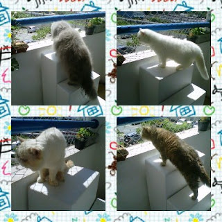 redes para gatos