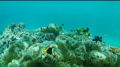 Snorkeling tour in Indonesia