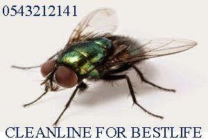 شركة رش,ومكافحة حشرات بجدة, شركات مكافحة الحشرات, ورش مبيدات,وإبادة الحشرات