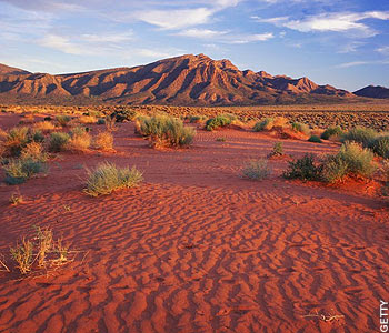 ekosistem gurun