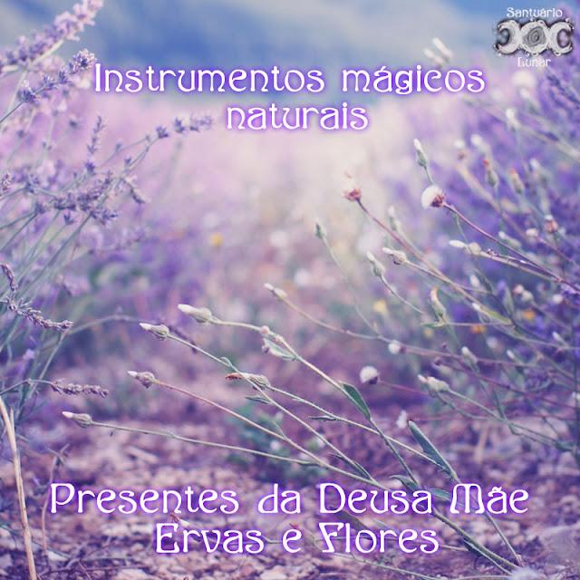 Instrumentos mágicos naturais - Presentes da Deusa Mãe: Ervas e flores | Wicca, Magia, Bruxaria