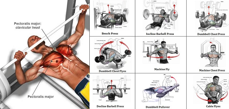 A Sample Chest Workout Routine - all-bodybuilding.com