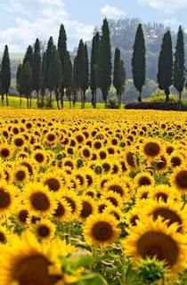 https://www.pinterest.fr/pauleenheath/flowers-i-love/