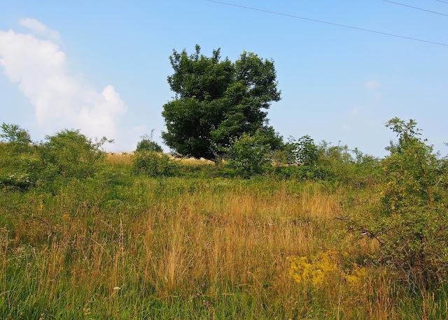 """Serbia, """"lasopołonina"""" - bo ani to las, ani też połonina z prawdziwego zdarzenia ;)"""