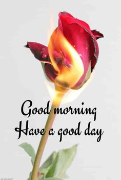 100 Lovely Good Morning Images With Quotes 2019 Good Morning