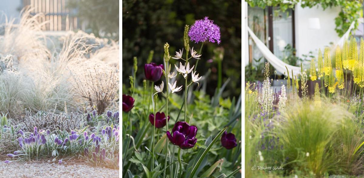 Gartenblog geniesser garten blumenzwiebeln fur den for Garten planen mit sonnenmarkise für balkon