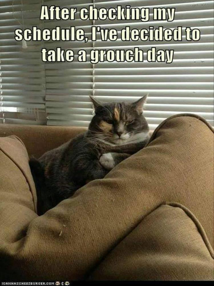 30 Funny animal captions - part 55, animal meme, funny caption pics