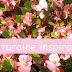 Naturalne inspiracje - Fototapety znowu na czasie