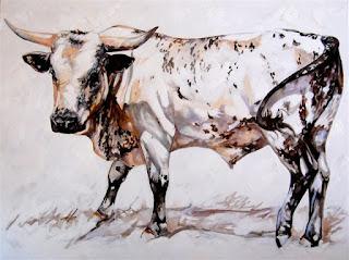 White Nguni Bull