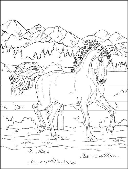Tranh tô màu con ngựa đang chạy