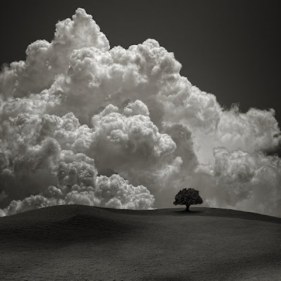 Fotografía blanco y negro árbol y nubes