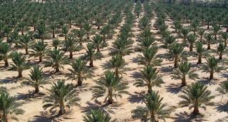 معلومات عن مشروع مليون نخلة في عمان